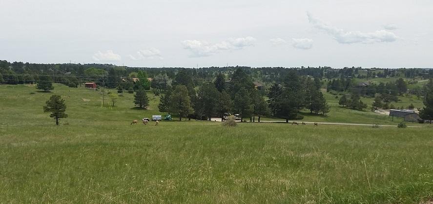 Ponderosa Hills scenery